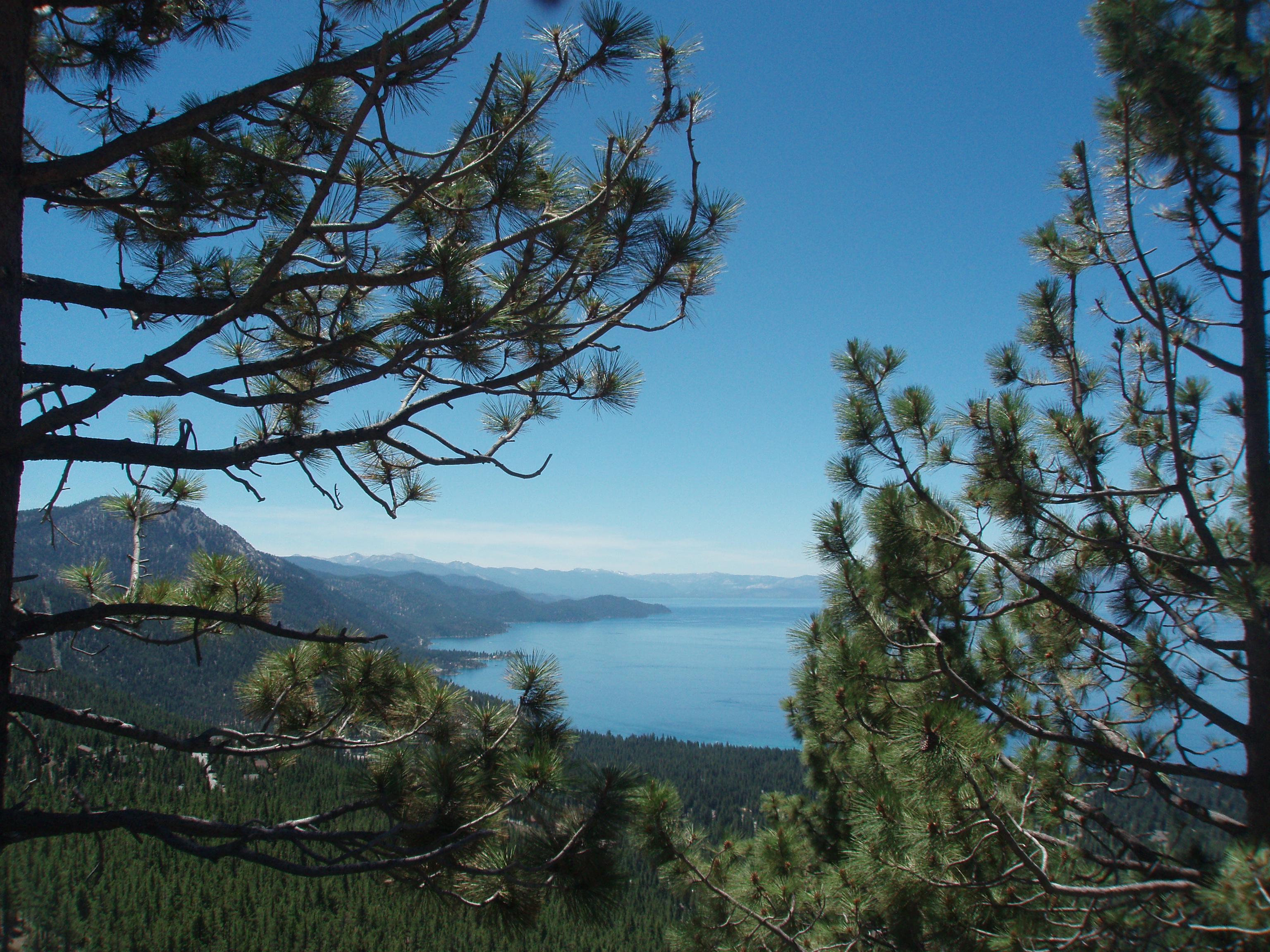 Lake Tahoe Gardening Tips For The Santa Cruz Mountains