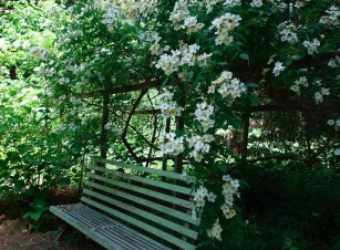 rose_Kathleen_bench 3