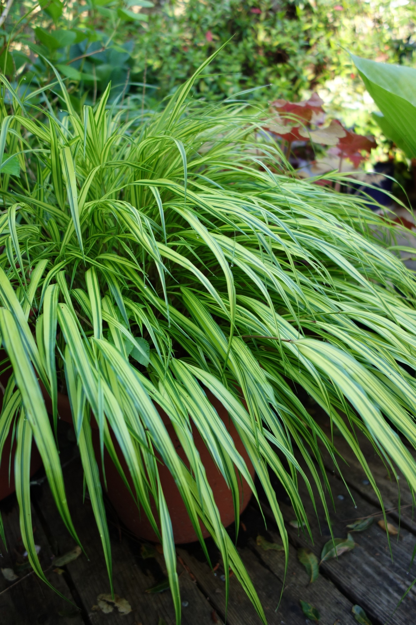 Water Features Gardening Tips For The Santa Cruz Mountains