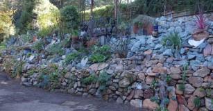 succulent_wall.1280