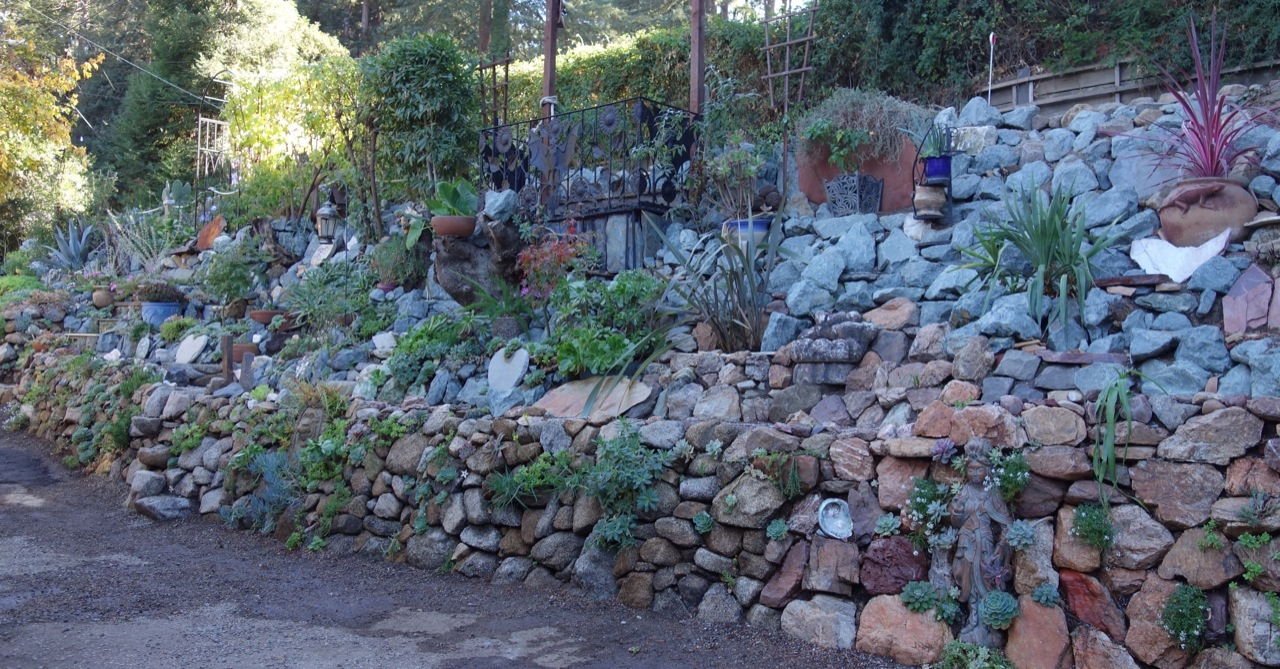 Succulents gardening tips for the santa cruz mountains for Landscaping rocks nelson