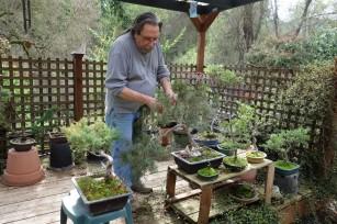 Pete_bonsai_collection