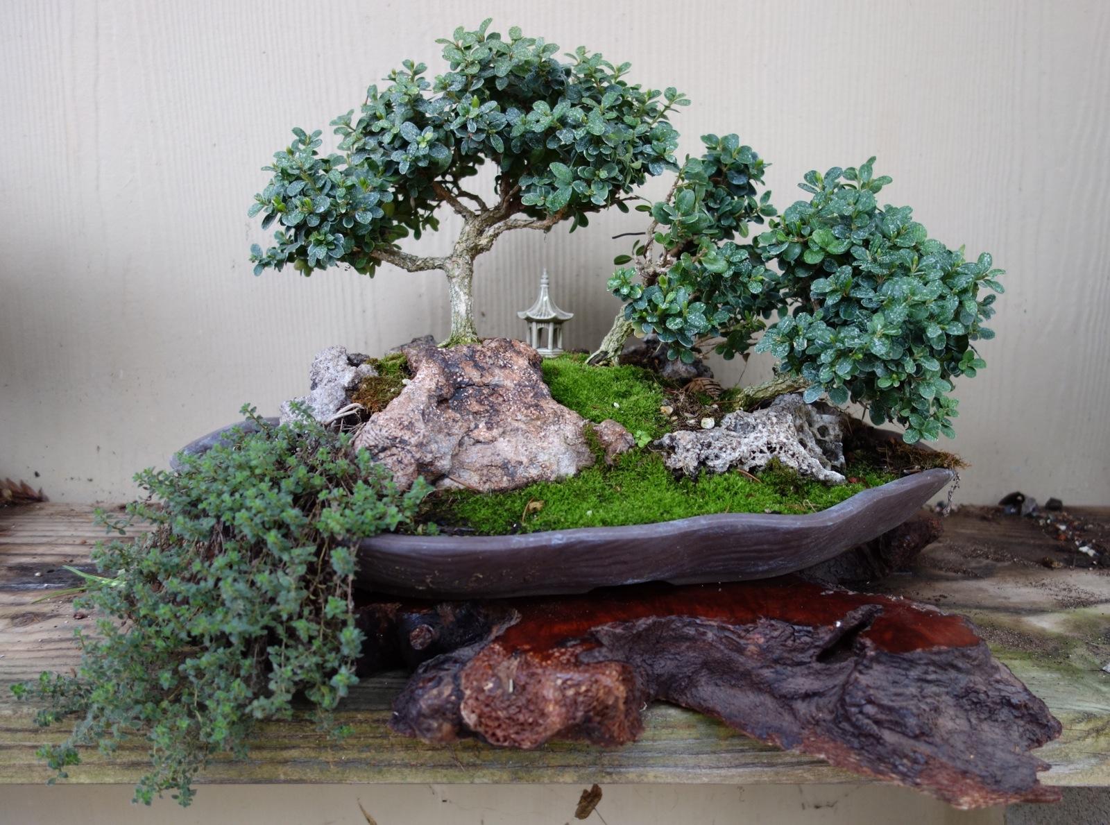 Bonsai gardening tips for the santa cruz mountains