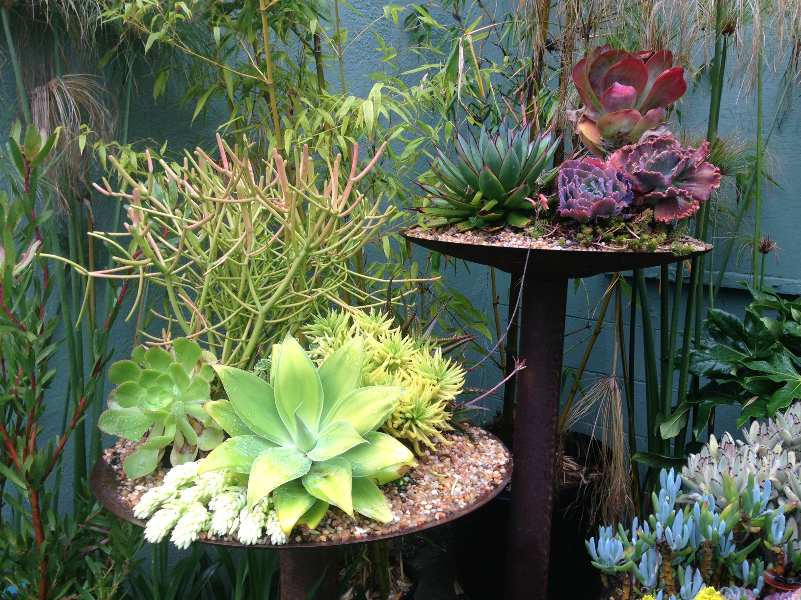 Container gardening gardening tips for the santa cruz mountains - How to make a succulent container garden ...