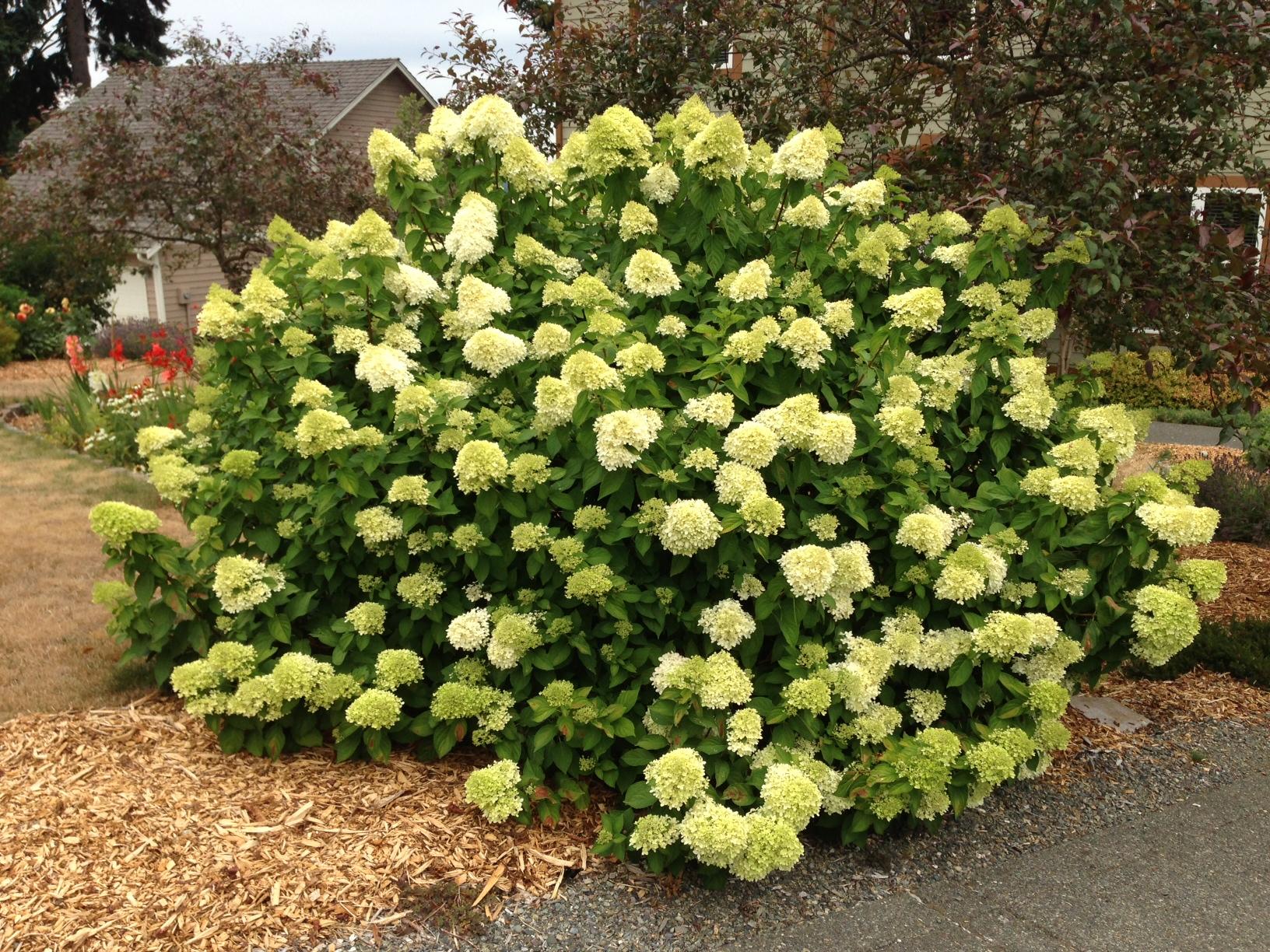 Pacific Northwest Gardening Tips For The Santa Cruz Mountains