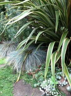 plant_combo2-phormium_CreamDelight-blueFescue-sempervivum