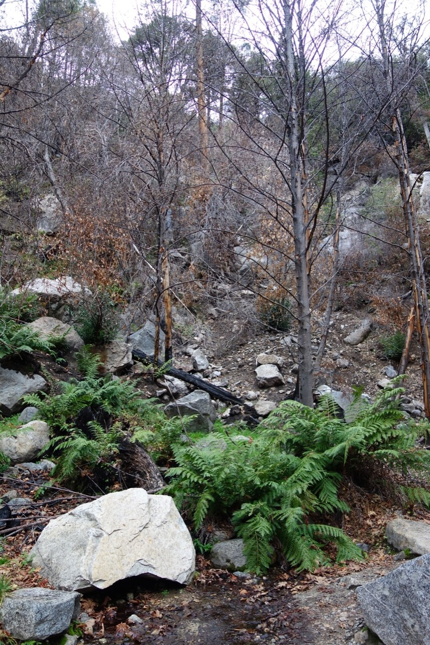 Yosemite fire water renewal gardening tips for the for Landscaping rocks nelson