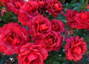 rose_Hot_Cocoa.2048