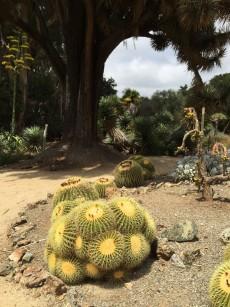 barrel_cactus.1280