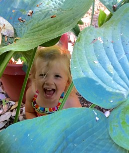 Adelyn in hosta