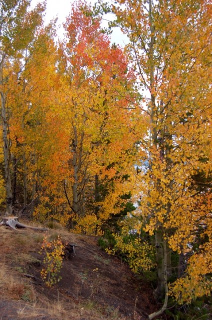 fall color_mixed forest_Wyoming
