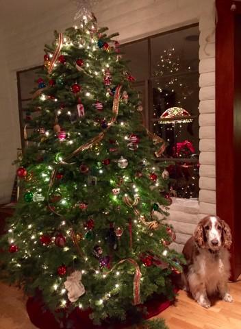 Sherman and Christmas tree