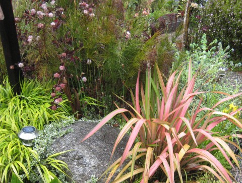 Vignette composed of Summer Wine physocarpus, Phormium 'Jester', Elegia capensis, and Japanese Forest Grass
