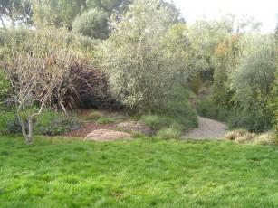 carex meadow
