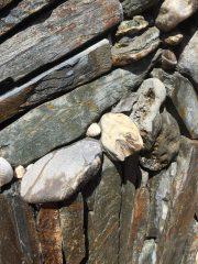 eel_head_rock.1600