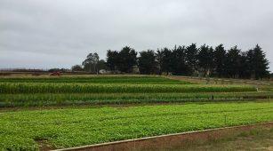 UCSC Farm_Garden_crops