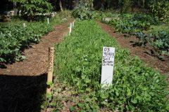 soil_builder_cover_crop_mix-1600