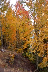 fall-color_mixed-forest_wyoming