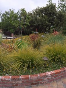 Nz Grasses For Landscaping Grasses gardening tips for the santa cruz mountains lomandra and nz flax in mixed planting workwithnaturefo