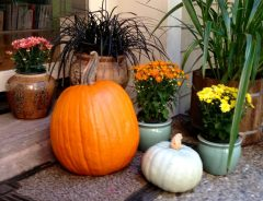 pumpkin_and_mums
