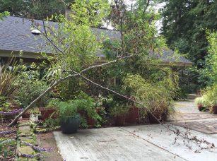 Gardening Tips For The Santa Cruz Mountains Mountain