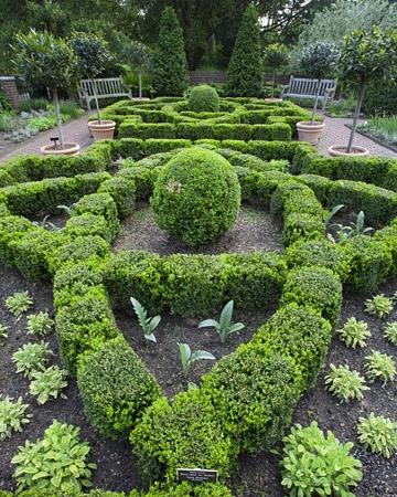 find in an herb garden as