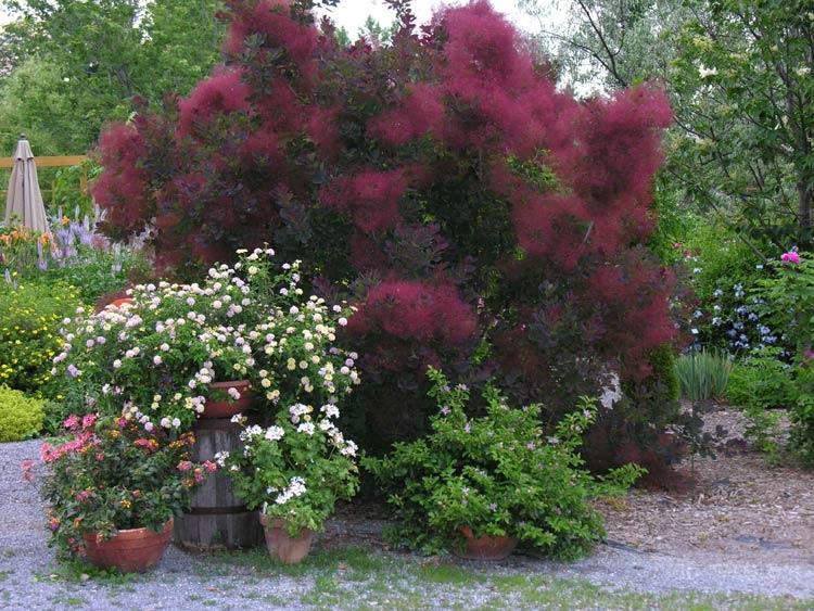 10 july 2010 gardening tips for the santa cruz mountains. Black Bedroom Furniture Sets. Home Design Ideas